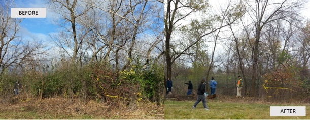 Before-After-Buckthorn