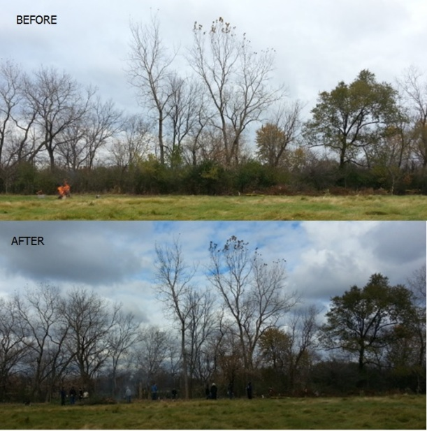 before-after-buckthorn2